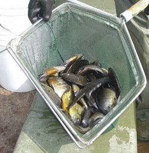Fish Stocking - Wisconsin Lake & Pond