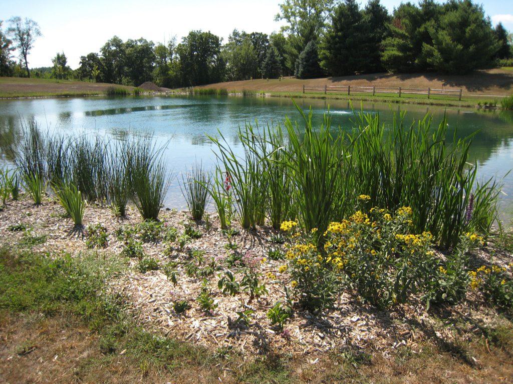 new pond, wildlife pond